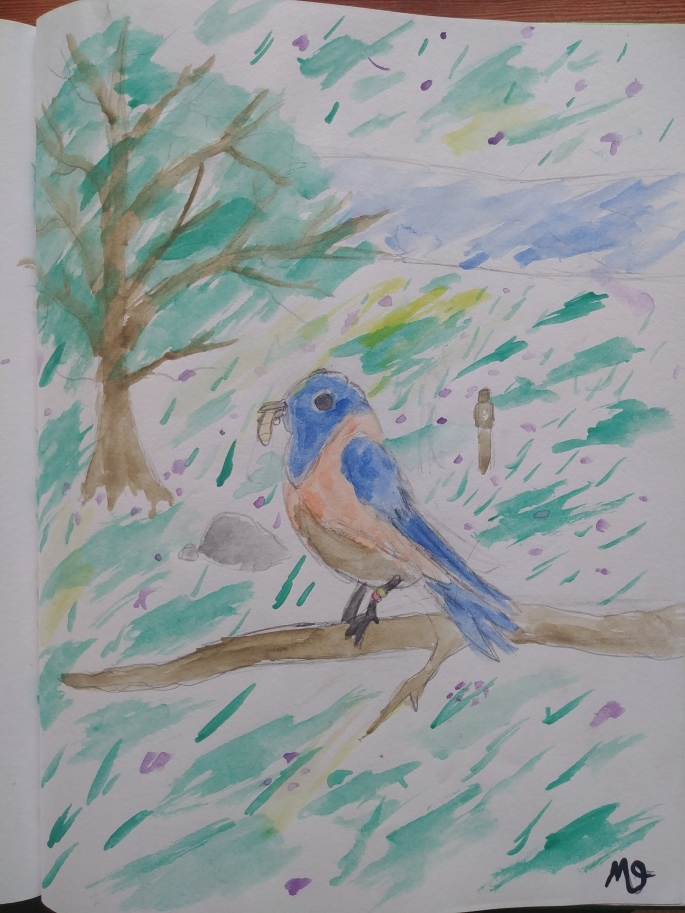 Malcolm's Bluebird drawing
